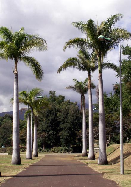 Parc boisé Le Port