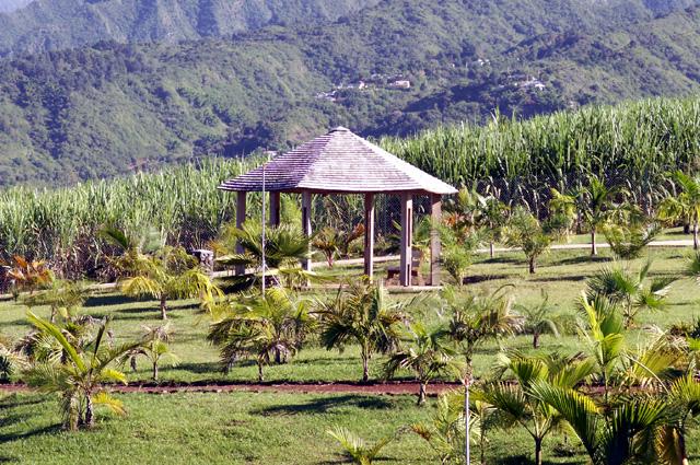 Palmeraie des Trois Mares La Réunion