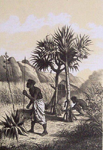 Population de La Réunion : Types Cafres