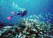 Plongée île de La Réunion