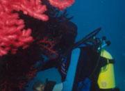 Activité : Plongée île de La Réunion