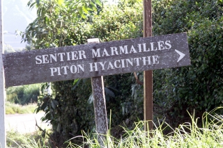 Sentier marmailles Piton Hyacinthe.