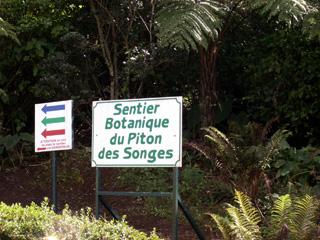 Sentier Botanique du Piton des Songes Plaine des Palmistes La Réunion.