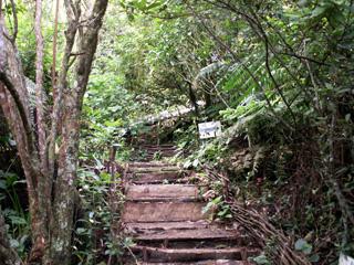 Sentier Botanique du Piton des Songes.