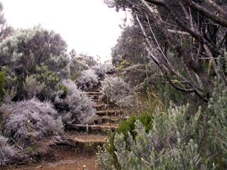 Sentier entre le Piton Partage et le Nez coupé de Sainte-Rose.
