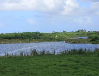 Étang de Cambuston Saint-André La Réunion.