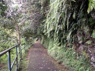 Sentier randonnée îlet Bethléem Saint-Benoit.