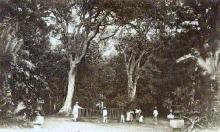 Jardin de l'État Saint-Denis La Réunion.