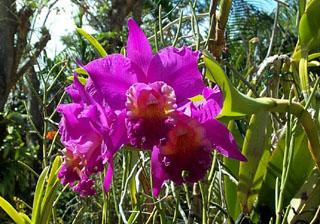 Jardin des Orchidées Saint-Joseph La Réunion