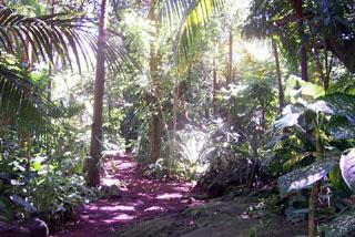 Jardin des parfums et des épices Saint-Philippe La Réunion.