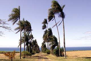 Domaine du Grand Hazier Sainte-Suzanne île de La Réunion