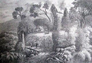 Les rampes de la Savanne à Salazie.
