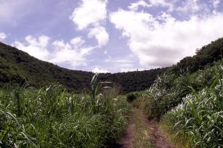 Piton Montvert La Réunion.